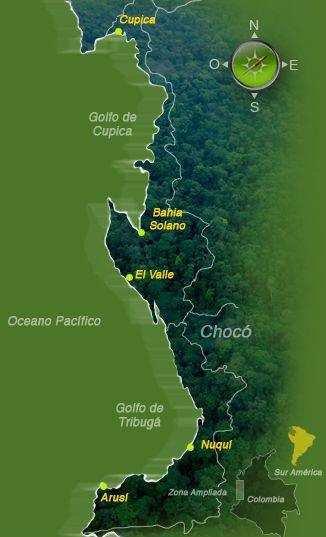 No a la tala de árboles en la selva virgen de Bahia Solano (1/6)