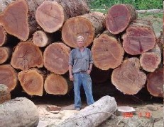 No a la tala de árboles en la selva virgen de Bahia Solano (3/6)